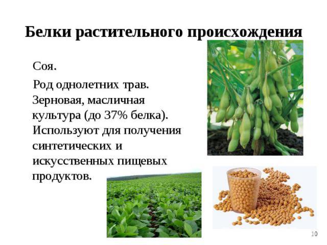 Соя. Соя. Род однолетних трав. Зерновая, масличная культура (до 37% белка). Используют для получения синтетических и искусственных пищевых продуктов.
