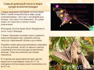 Самый длинный язык в мире среди млекопитающих Ученые выяснили: нектарная летучая