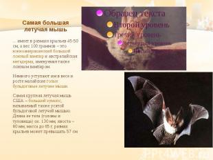 Самая большая летучая мышь ... имеет в размахе крыльев 45-50 см, а вес 100 грамм