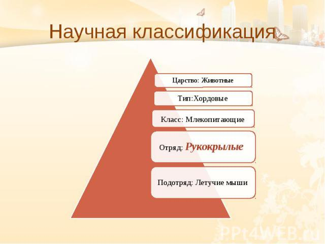 Научная классификация