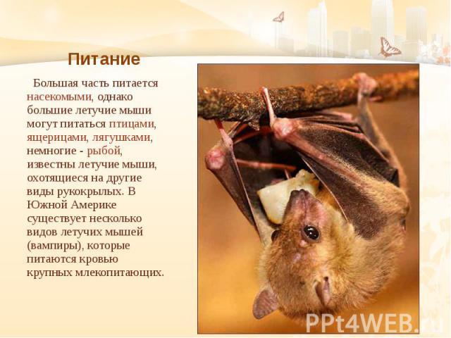 Питание Большая часть питается насекомыми, однако большие летучие мыши могут питаться птицами, ящерицами, лягушками, немногие - рыбой, известны летучие мыши, охотящиеся на другие виды рукокрылых. В Южной Америке существует несколько видов летучих мы…