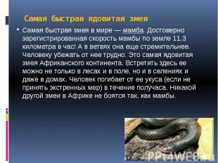 Самая быстрая ядовитая змея Самая быстрая змея в мире —мамба. Достоверно з
