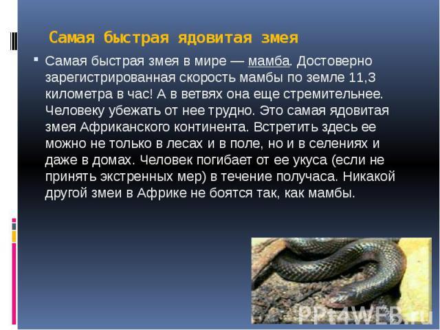 Самая быстрая ядовитая змея Самая быстрая змея в мире —мамба. Достоверно зарегистрированная скорость мамбы по земле 11,3 километра в час! А в ветвях она еще стремительнее. Человеку убежать от нее трудно. Это самая ядовитая змея Африканского ко…
