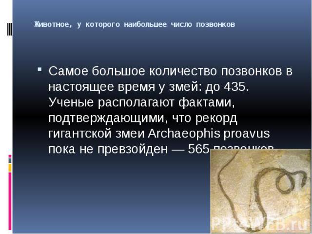 Животное, у которого наибольшее число позвонков Самое большое количество позвонков в настоящее время у змей: до 435. Ученые располагают фактами, подтверждающими, что рекорд гигантской змеи Archaeophis proavus пока не превзойден — 565 позвонков.