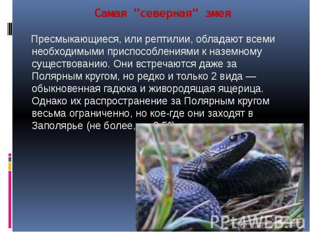 """Самая """"северная"""" змея Пресмыкающиеся, или рептилии, обладают всеми необходимыми приспособлениями к наземному существованию. Они встречаются даже за Полярным кругом, но редко и только 2 вида — обыкновенная гадюка и живородящая ящерица. Одна…"""