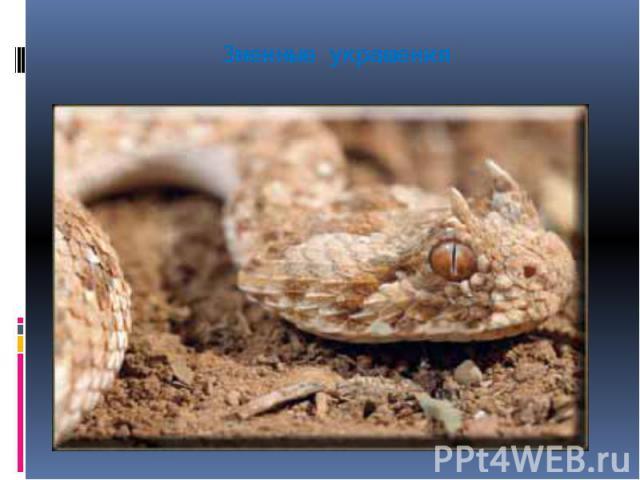 Змеиные украшения