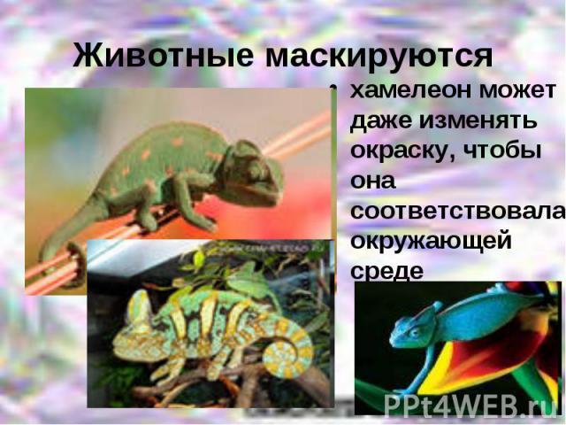хамелеон может даже изменять окраску, чтобы она соответствовала окружающей среде хамелеон может даже изменять окраску, чтобы она соответствовала окружающей среде