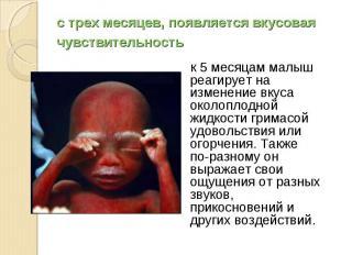 к 5 месяцам малыш реагирует на изменение вкуса околоплодной жидкости гримасой уд