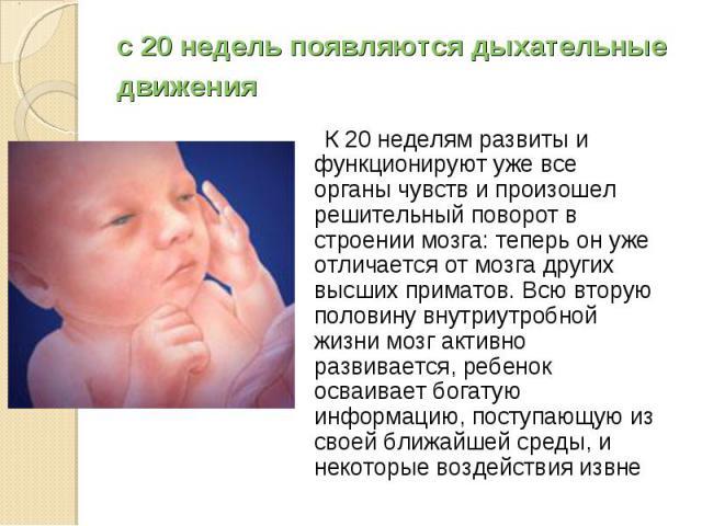 К 20 неделям развиты и функционируют уже все органы чувств и произошел решительный поворот в строении мозга: теперь он уже отличается от мозга других высших приматов. Всю вторую половину внутриутробной жизни мозг активно развивается, ребенок осваива…