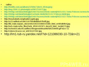 сайты сайты http://fotolife.com.ua/albums/1/589e71de/xl_6fc6a.jpeg http://img-20