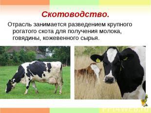 Отрасль занимается разведением крупного рогатого скота для получения молока, гов