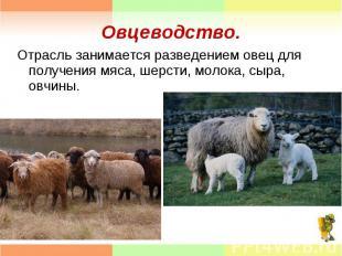 Отрасль занимается разведением овец для получения мяса, шерсти, молока, сыра, ов