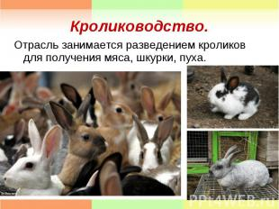 Отрасль занимается разведением кроликов для получения мяса, шкурки, пуха. Отрасл