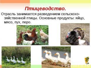 Отрасль занимается разведением сельскохо- зяйственной птицы. Основные продукты: