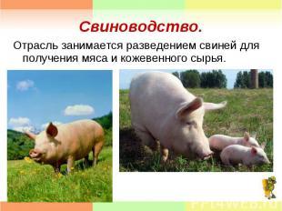 Отрасль занимается разведением свиней для получения мяса и кожевенного сырья. От