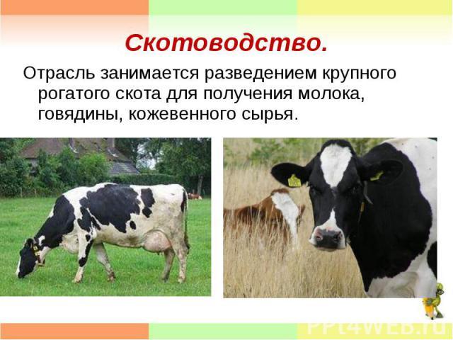 Отрасль занимается разведением крупного рогатого скота для получения молока, говядины, кожевенного сырья. Отрасль занимается разведением крупного рогатого скота для получения молока, говядины, кожевенного сырья.