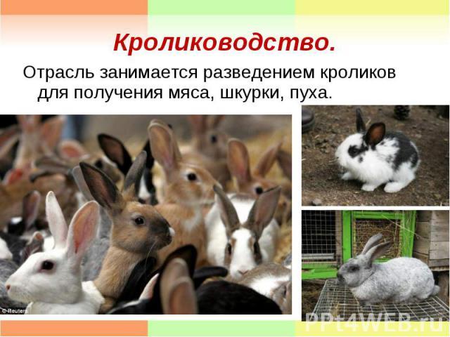 Отрасль занимается разведением кроликов для получения мяса, шкурки, пуха. Отрасль занимается разведением кроликов для получения мяса, шкурки, пуха.
