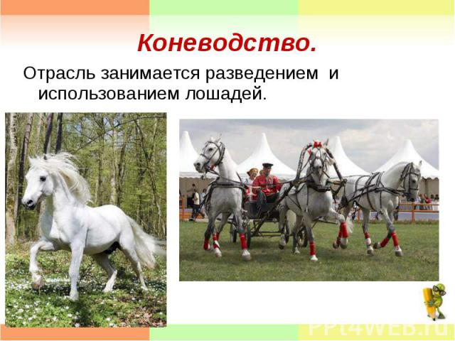 Отрасль занимается разведением и использованием лошадей. Отрасль занимается разведением и использованием лошадей.