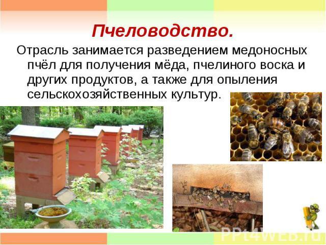 Отрасль занимается разведением медоносных пчёл для получения мёда, пчелиного воска и других продуктов, а также для опыления сельскохозяйственных культур. Отрасль занимается разведением медоносных пчёл для получения мёда, пчелиного воска и других про…