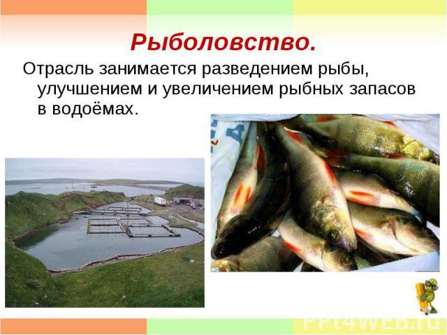 Отрасль занимается разведением рыбы, улучшением и увеличением рыбных запасов в водоёмах. Отрасль занимается разведением рыбы, улучшением и увеличением рыбных запасов в водоёмах.