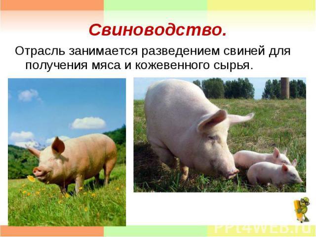 Отрасль занимается разведением свиней для получения мяса и кожевенного сырья. Отрасль занимается разведением свиней для получения мяса и кожевенного сырья.