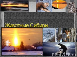 Животные Сибири.