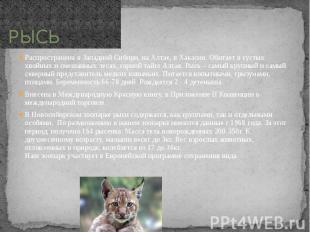 РЫСЬ Распространена в Западной Сибири, на Алтае, в Хакасии. Обитает в густых хво