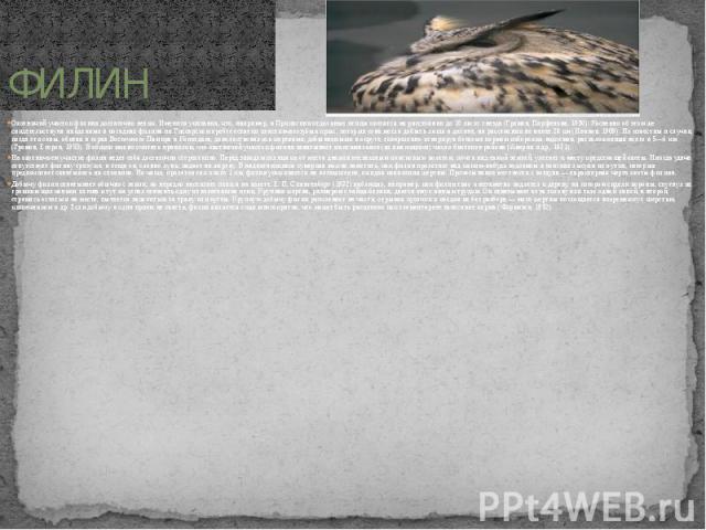 ФИЛИН Охотничий участок филина достаточно велик. Имеются указания, что, например, в Прикаспии отдельные птицы охотятся на расстоянии до 10 км от гнезда (Громов, Парфенова, 1950). Косвенно об этом же свидетельствуют найденные в погадках филина на Гис…