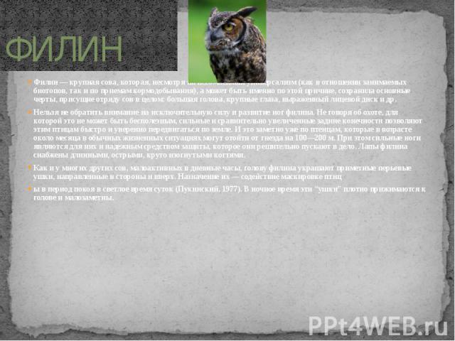 ФИЛИН Филин — крупная сова, которая, несмотря на несомненный универсализм (как в отношении занимаемых биотопов, так и по приемам кормодобывания), а может быть именно по этой причине, сохранила основные черты, присущие отряду сов в целом: большая гол…