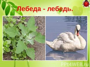 Лебеда - лебедь. Если мне на место «а» Мягкий знак дадите, Сразу сорную траву В