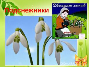 Подснежники Какие цветы, в одном из своих произведений, известный писатель С.Я.