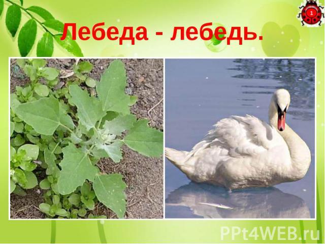 Лебеда - лебедь. Если мне на место «а» Мягкий знак дадите, Сразу сорную траву В птицу превратите.