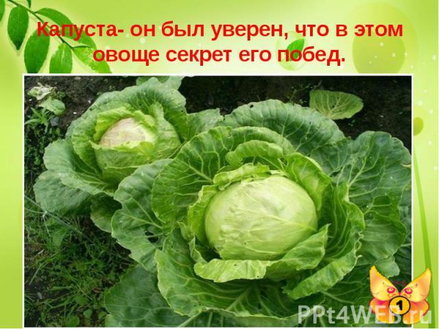 Капуста- он был уверен, что в этом овоще секрет его побед. Выдающийся полководец древности Александр Македонский, по преданию, считал необходимым накормить этим растением своих воинов. Какое это растение и зачем он их кормил?