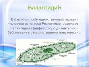 Балантидий Balantidium coli- единственный паразит человека из класса Ресничные,