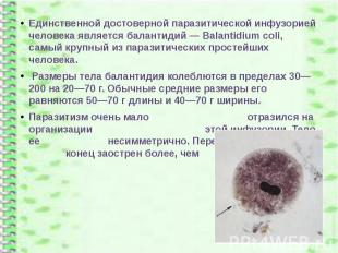 Единственной достоверной паразитической инфузорией человека является балантидий