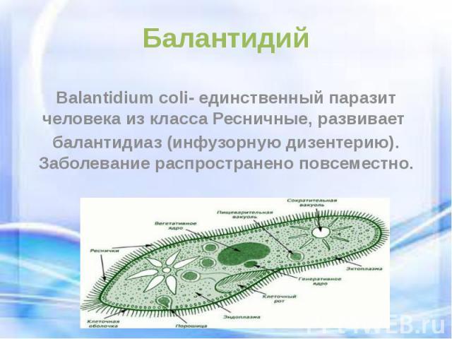 Балантидий Balantidium coli- единственный паразит человека из класса Ресничные, развивает балантидиаз (инфузорную дизентерию). Заболевание распространено повсеместно.