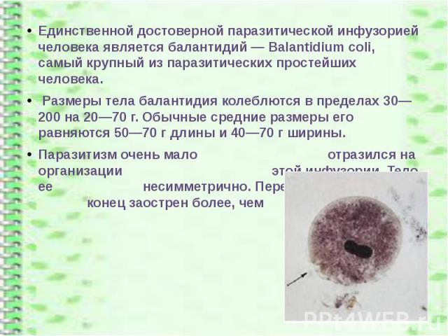 Единственной достоверной паразитической инфузорией человека является балантидий — Balantidium coli, самый крупный из паразитических простейших человека. Единственной достоверной паразитической инфузорией человека является балантидий — Balantidium co…