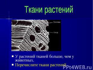 У растений тканей больше, чем у животных. У растений тканей больше, чем у животн