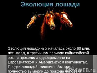 Эволюция лошади Эволюция лошадиных началась около 60 млн. лет назад, в третичном