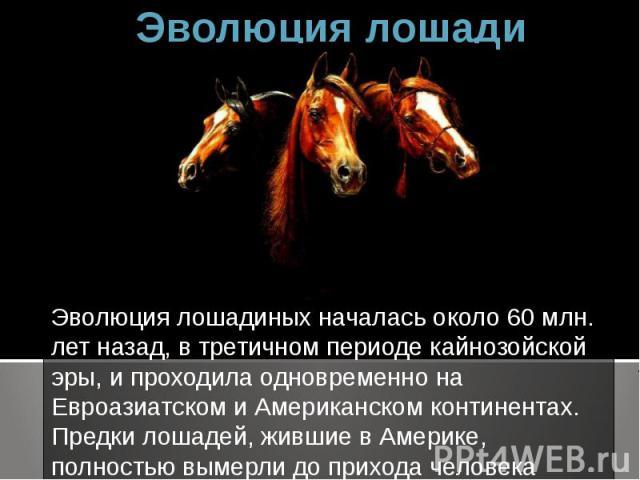 Эволюция лошади Эволюция лошадиных началась около 60 млн. лет назад, в третичном периоде кайнозойской эры, и проходила одновременно на Евроазиатском и Американском континентах. Предки лошадей, жившие в Америке, полностью вымерли до прихода человека