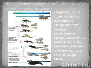 Происхождение современных китов от наземных млекопитающих.