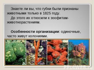 Знаете ли вы, что губки были признаны животными только в 1825 году. Знаете ли вы