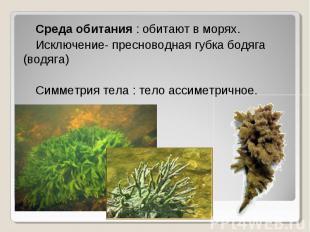 Среда обитания : обитают в морях. Среда обитания : обитают в морях. Исключение-