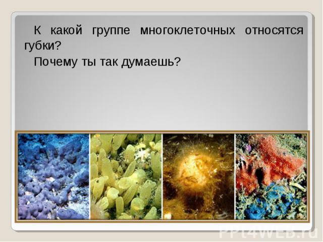 К какой группе многоклеточных относятся губки? К какой группе многоклеточных относятся губки? Почему ты так думаешь?
