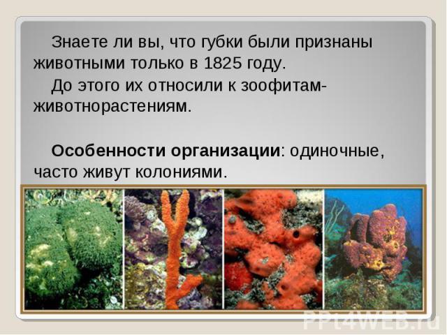 Знаете ли вы, что губки были признаны животными только в 1825 году. Знаете ли вы, что губки были признаны животными только в 1825 году. До этого их относили к зоофитам- животнорастениям. Особенности организации: одиночные, часто живут колониями.