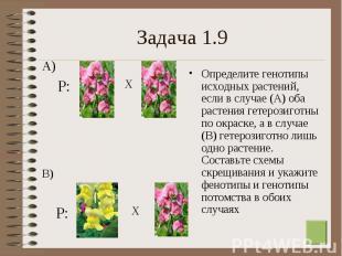 Определите генотипы исходных растений, если в случае (А) оба растения гетерозиго