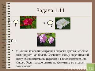 У ночной красавицы красная окраска цветка неполно доминирует над белой. Составьт