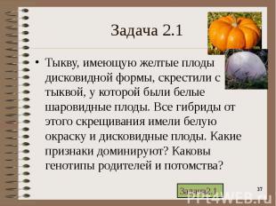 Тыкву, имеющую желтые плоды дисковидной формы, скрестили с тыквой, у которой был