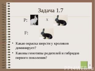 Какая окраска шерсти у кроликов доминирует? Какая окраска шерсти у кроликов доми