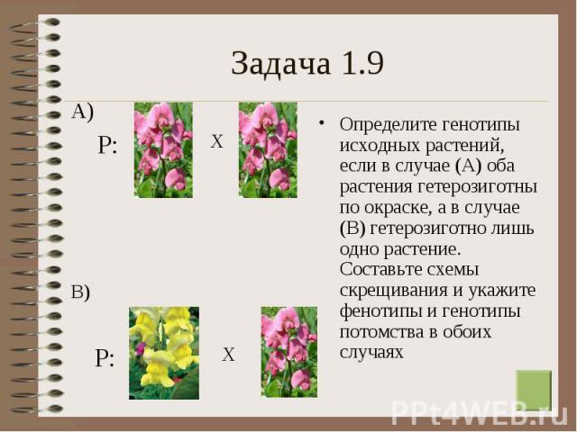 Определите генотипы исходных растений, если в случае (А) оба растения гетерозиготны по окраске, а в случае (В) гетерозиготно лишь одно растение. Составьте схемы скрещивания и укажите фенотипы и генотипы потомства в обоих случаях Определите генотипы …